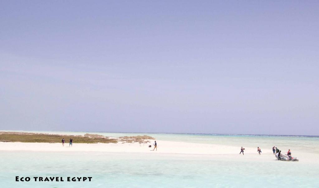 Wadi_elgemal_Syial island_marsa alam